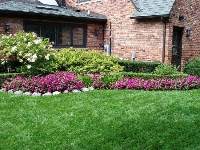 Floral backyard
