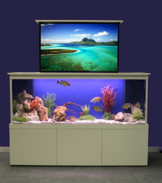 fish tank with tv
