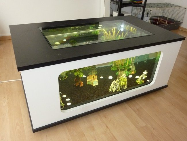 White fish tank with black top