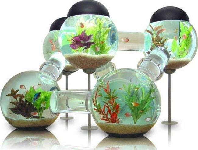 fish tank in the glass